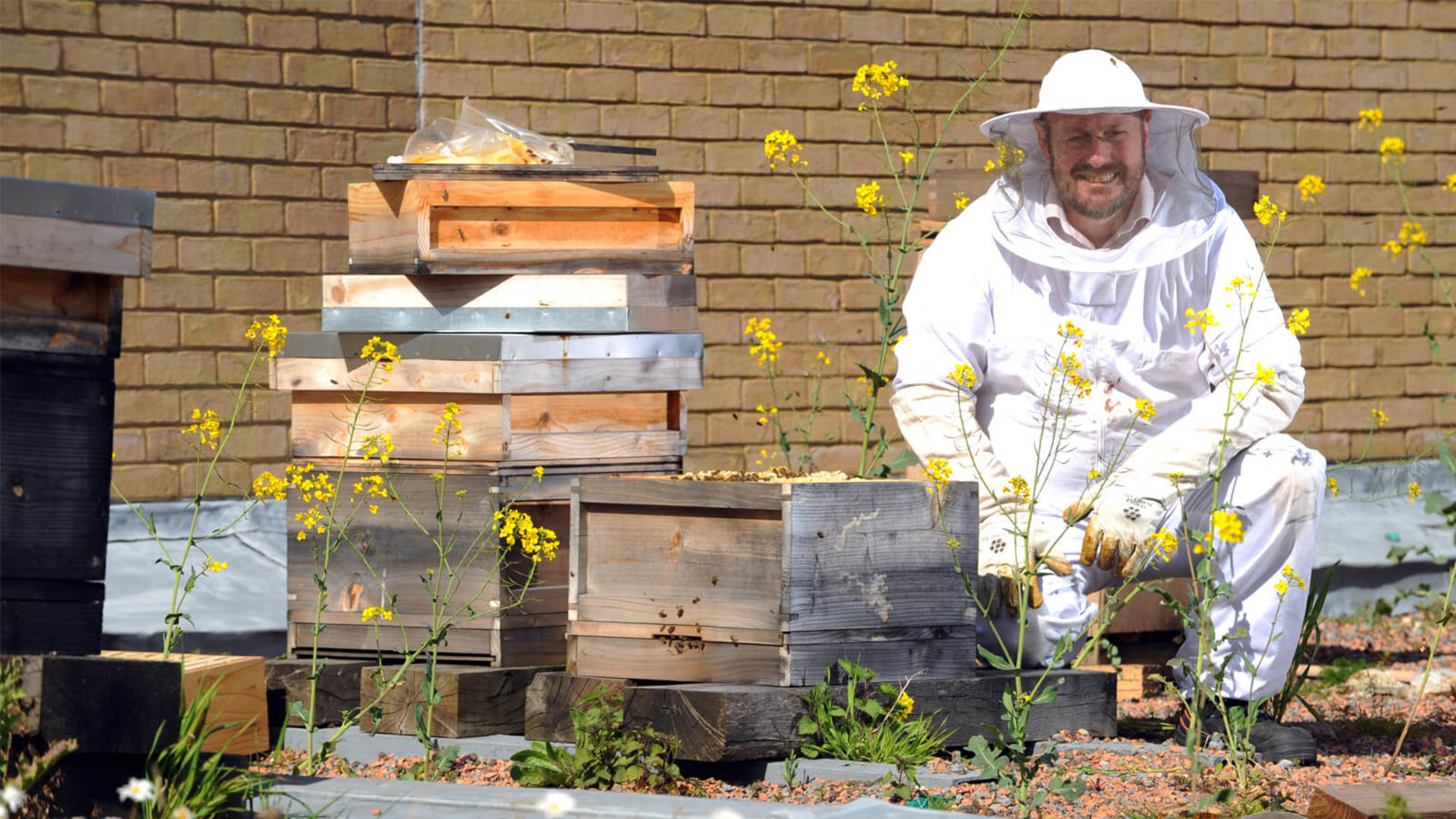 Bees at St David's